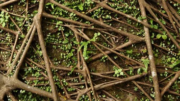 Network of brown tree roots with green leaves